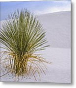 Lonely Yucca Plant In White Sands Metal Print