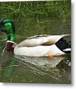 Lonesome Duck Metal Print