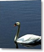 Lonesome Swan Metal Print