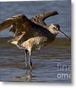 Long-billed Curlew Metal Print