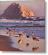 Long Billed Curlew - Morro Rock Metal Print