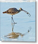 Long-billed Curlew With Crab Metal Print