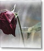 Red Rose Still Life Metal Print