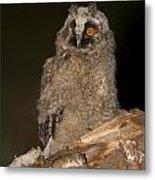 Long-eared Owl Asio Otus Metal Print