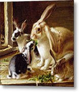Long-eared Rabbits In A Cage Watched By A Cat Metal Print by Horatio Henry Couldery