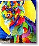 Long Haired Chihuahua Metal Print