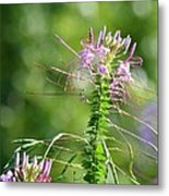 Long Lavender Fingers Metal Print