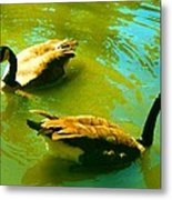Long Neck Ducks Metal Print