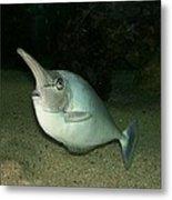 Long Nose Fish Metal Print