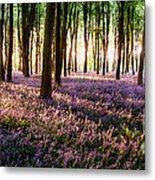 Long Shadows In Bluebell Woods Metal Print