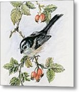 Long Tailed Tit And Rosehips Metal Print