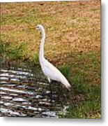 Long White Strides Metal Print