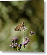Long-winged Skipper Butterfly Metal Print