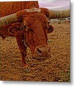 Longhorn Portrait Metal Print