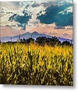 Longs Peak Harvest Metal Print by Rebecca Adams