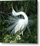 Look At Me Metal Print by Sabrina L Ryan