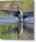 Look At My Wings Metal Print