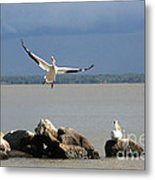 Look Ma - I Can Fly Metal Print