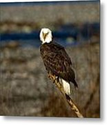 Look Out Perch Metal Print