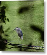 Look Through The Trees Metal Print