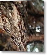 Looking At Bark Metal Print