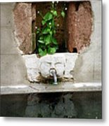Looking Deeper Metal Print by Lainie Wrightson