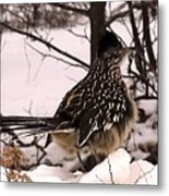 Looking For A Warm Spot. Metal Print by Edward Hamilton
