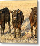 Looking For Trouble 5-3-2014 Metal Print