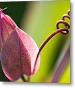 Looking Into A Pink Bud Metal Print