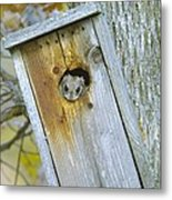 Looking Outside The Box Metal Print