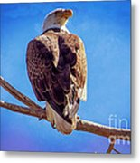 Looking Right Metal Print by Bob Hislop