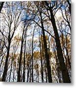 Looking Skyward Into Autumn Trees Metal Print