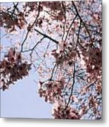 Looking Through Cherry Blossoms Metal Print