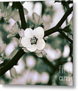 Looking Through The Blossoms 2 By Kaye Menner Metal Print