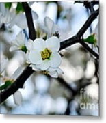 Looking Through The Blossoms Metal Print