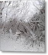 Looking Through The Frost Iv Metal Print