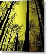 Looking Through The Naked Trees  Metal Print