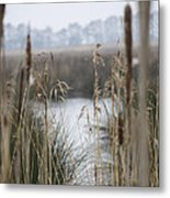 Looking Through The Reeds Metal Print