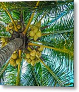Looking Up A Coconut Tree Metal Print