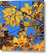 Looking Up To Yellow Leaves Metal Print