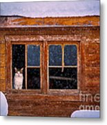 Looks Cold Out There Metal Print
