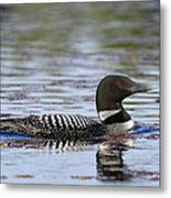 Loon And Reflection Metal Print