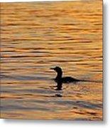 Loon At Sunset 6958 Metal Print