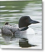 Loon Chick Rise And Shine Metal Print