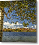 Loon Lake In Autumn With White Birch Tree Metal Print