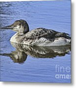 Loon On Vacation Metal Print