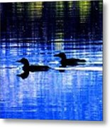 Loons In Pittsburg Metal Print by Will Boutin Photos
