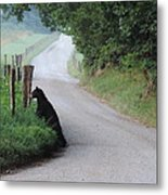 Lost Bear Cub In Cades Cove Metal Print