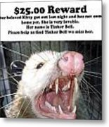 Lost Cat Cash Reward Metal Print