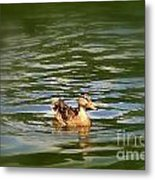 Lost Duck Metal Print